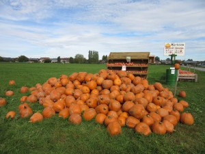 Roadside Pumpkin Patch