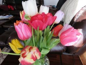 Tulpens
