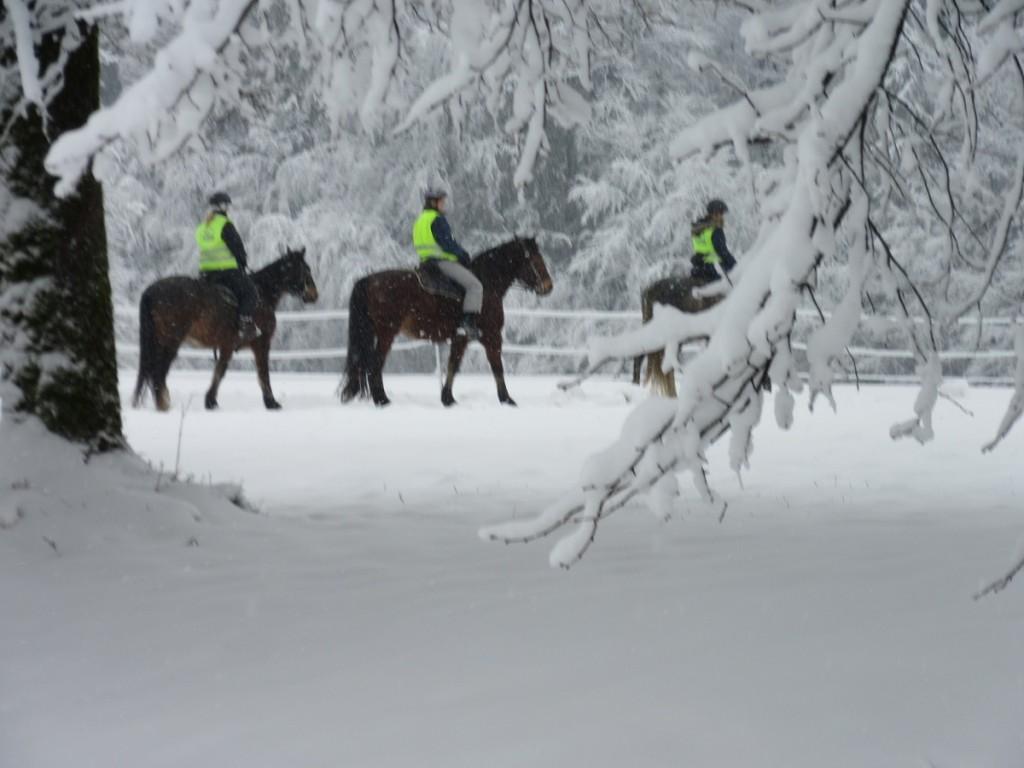 Horses6