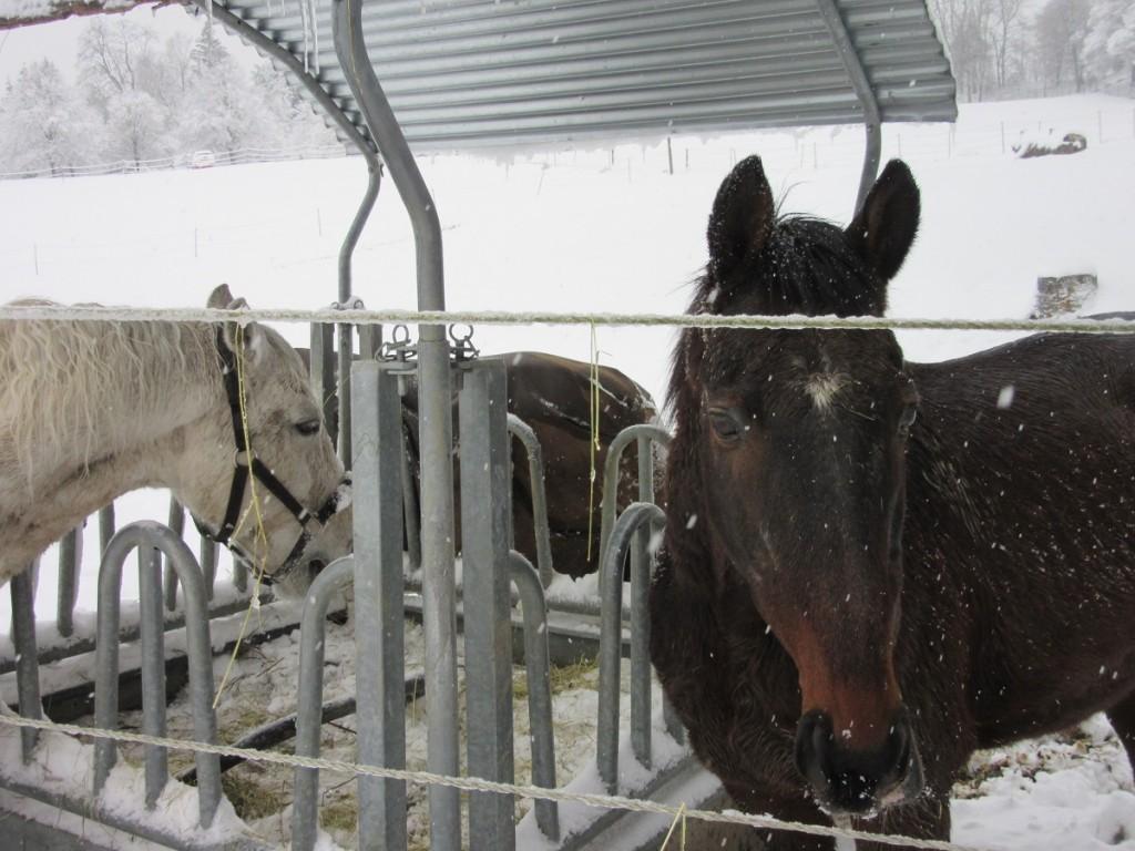 Very close Horses