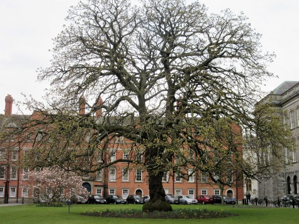 Oak at Trinity