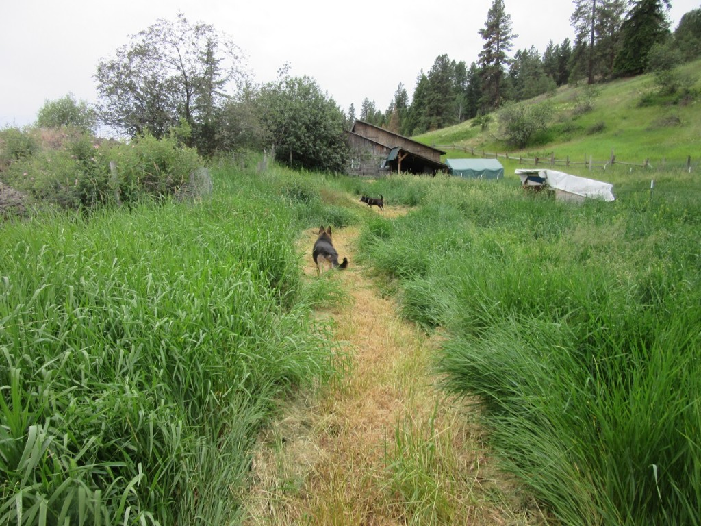 Dogs on path