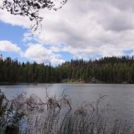 Nature's Beauty-Swan Lake