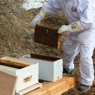 The Bee Man Cometh