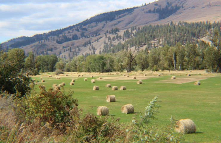 It's Late Summer in Ferry County